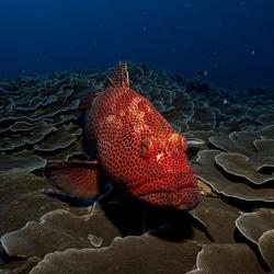 fish-rosacea